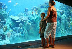 Cameron Park Zoo Brazos River