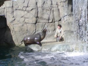 El Paso Zoo Sea Lion Exhibit
